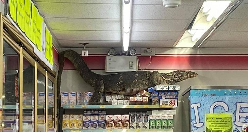 Rampaging, thirsty lizard terrifies Bangkok 7-Eleven (Video) | Coconuts  Bangkok